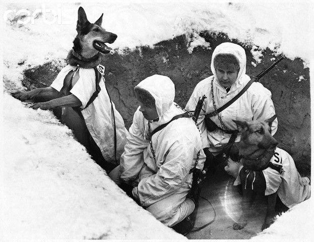 The dogs of war (World War II) - vintage