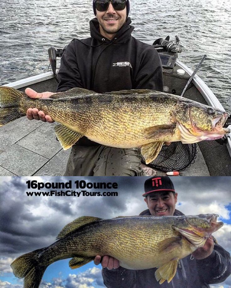 7 best fishing images on pinterest bass fishing fishing for Ice fishing guides minnesota