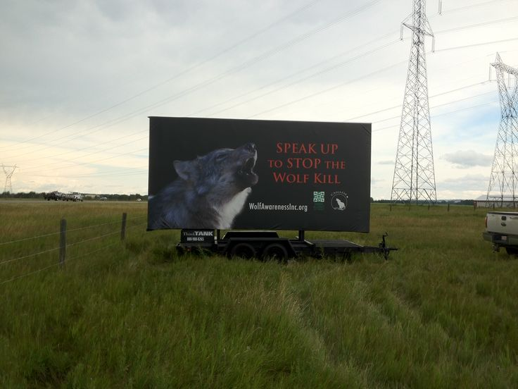 Wolf Awareness Inc. is utilizing one of ThinkTANK's Trailer Billboards to get their message across about wolf conservation #outofhomemarketing #outdooradvertising #alternativeadvertising