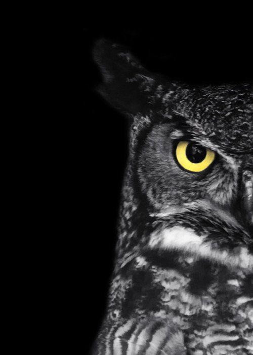 "Great Horned Owl Photo - ""Ladybird"" - 5x7 Black and White Bird Photography Print - Minimal Animal Art - Black Background - Gift under 10. $10.00, via Etsy."