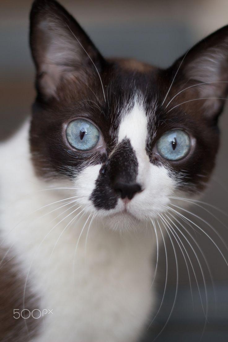 A cat named Cofee - O gato de uma amiga minha
