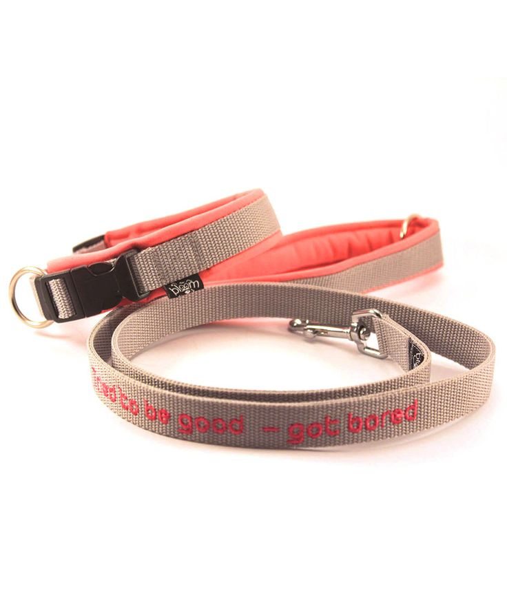 Safety collar with Funny leash