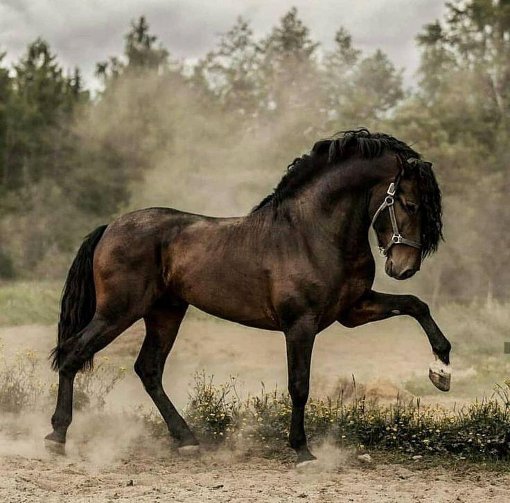 Pferde – Schießereien. – #Pferde #Schießen