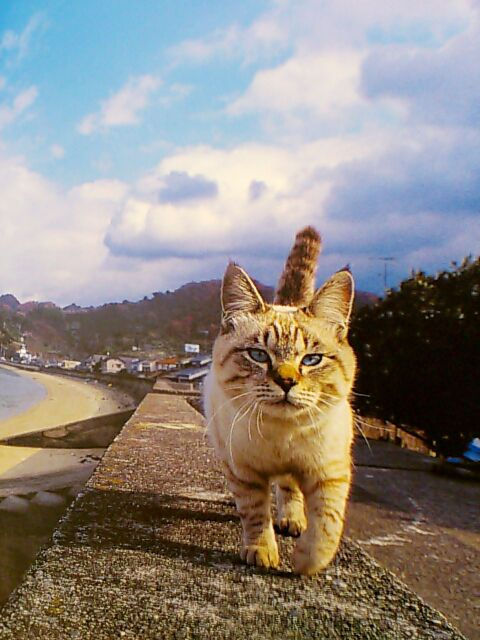 岩合光昭 猫 - Google 検索
