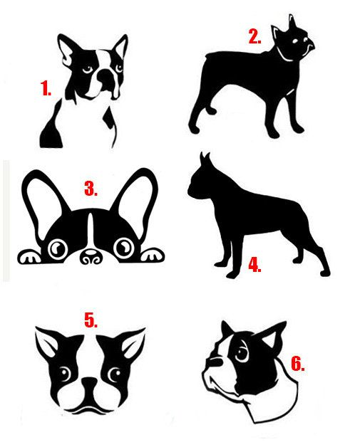 Boston Terrier Decal | Boston Terrier Vinyl Sticker - Boston Terrier, Terrier, Boston Terrier Dog, Boston Terrier Car Decal   Size will be approx. 3 x 3 If you need a larger size please contact us.   Personalize any surface including walls, cars, MacBook, motorcycle, boat or even office space. Create a one-of-a-kind decal for your home, vehicle, organization, or business.  - Precision Cut Vinyl Graphic Decals shipped in 1 to 3 business days! - De