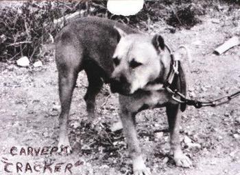ONLINE PEDIGREES :: [53] :: CARVER'S CRACKER (3XW)(1XL)