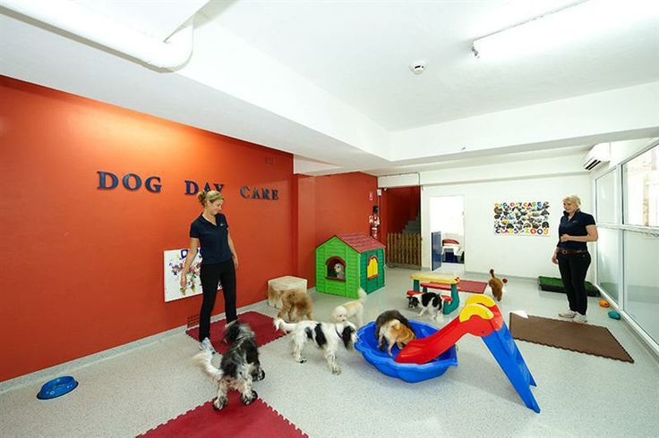 Pin By Trisha Mcclung On Interior Sleeping Play Dog Daycare Indoor Dog Park Dog Play Room