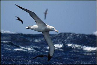 """""""Ul vurcelàsc dul mär"""", ovvero """"L'albatros"""" di Baudelaire - laBissa.com"""