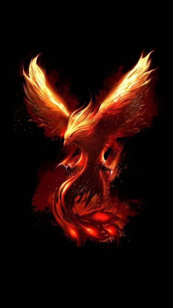 Phoenix wallpaper 109 phoenix in 2019 phoenix bird phoenix bird tattoos phoenix tattoo design - Fenix bird hd images ...