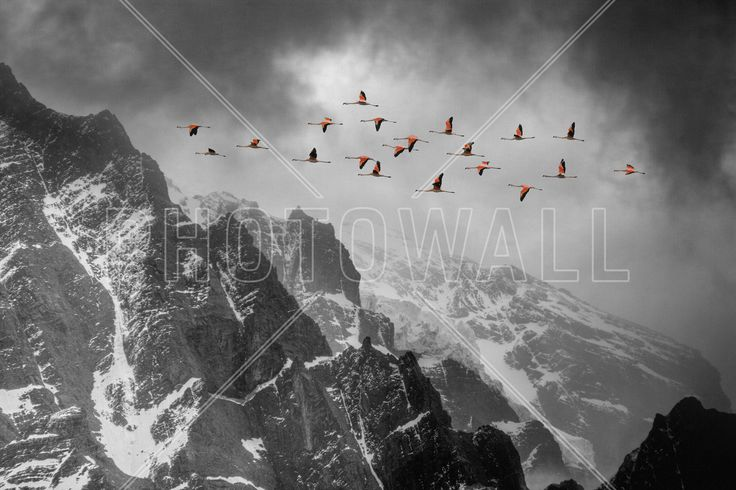 Long way from Home - Wall Mural