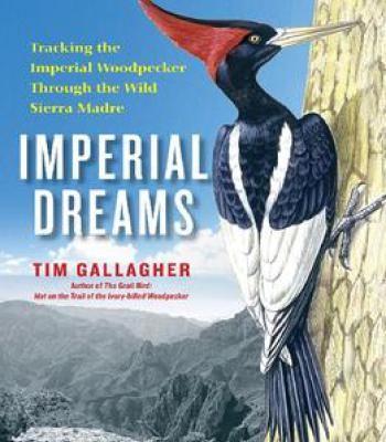 Imperial Dreams PDF