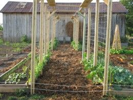 Raised bed garden trellis made with inexpensive page wire and 2 by 4 wood.