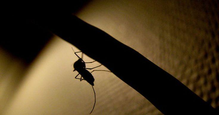 Cómo repeler mosquitos naturalmente. Cómo repeler mosquitos naturalmente. Nada arruina una adorable noche de verano más rápido que un ataque de hambrientos mosquitos. Sin embargo, los químicos encontrados en los repelentes de mosquitos comerciales han sido vinculados a muchos efectos secundarios y algunas personas los consideran peligrosos. Sigue estos pasos para que puedas repeler a ...