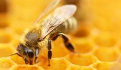 We have pledged to help our friends the honey bees. A dollar from every KOUSa cushion goes to support research to save the bees. Nous sommes heureux de supporter nos amies les abeilles butineuses. Un dollar pour chaque coussin KOUSa vendu ira à la recherche pour sauver les abeilles.