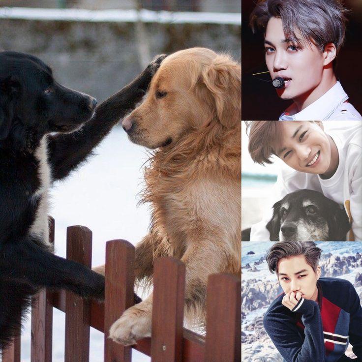 ChineseZodiac&KPOP // Dog // Kai of exo