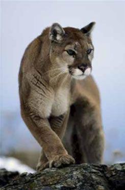 Animais selvagens   – Animals