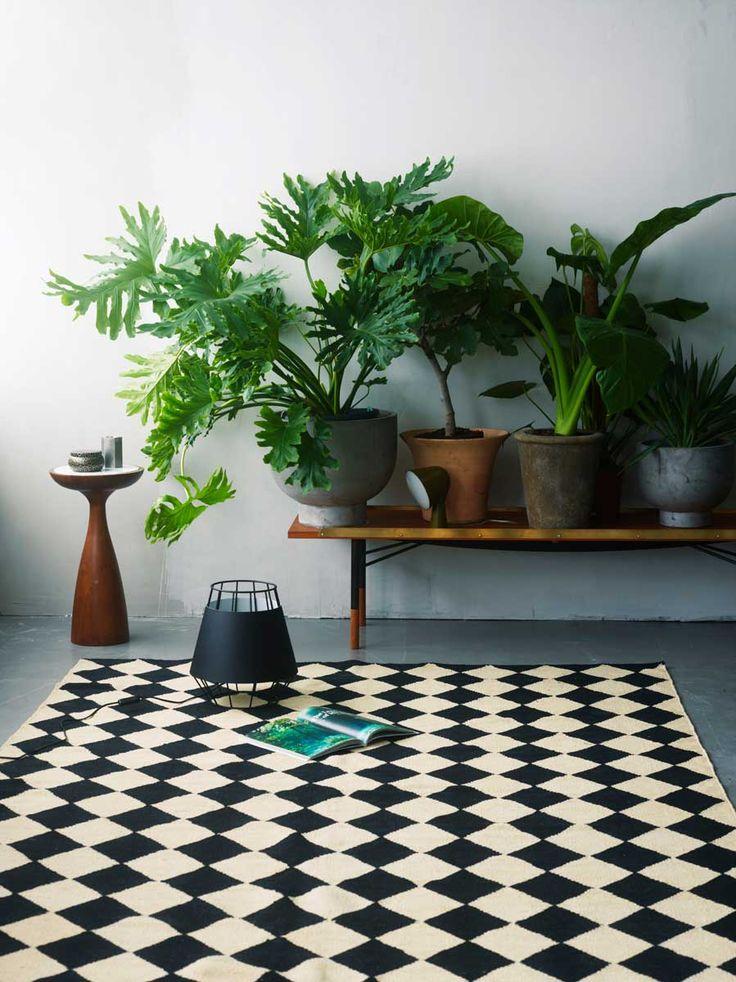 plantes vertes / carrelage