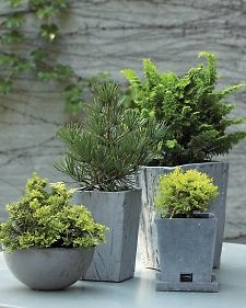 Plant a Tiny Winter Forest - Martha Stewart Gardening........Create a winter forest in miniature to enjoy all year long by potting low-maintenance dwarf conifers.