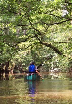Best 5 Fun Things To Do With Kids In Columbia Sc