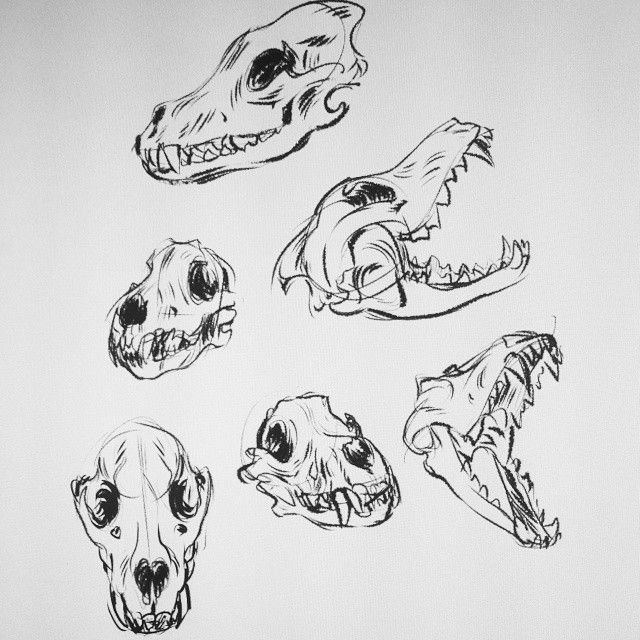 Been home sick the past few days, so drawing wolf skulls to keep me sane