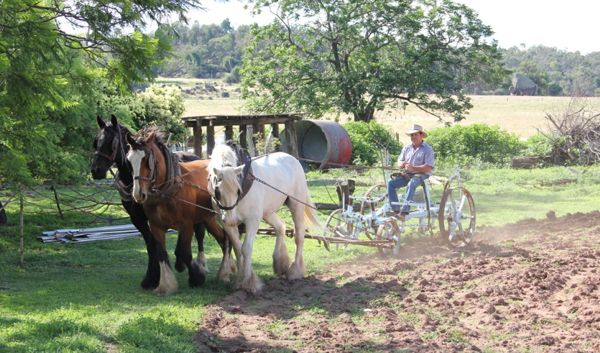 Visit a farmstay from the past on a Tour from Sydney - Bill shows how ploughing has always happened on Inglevale -