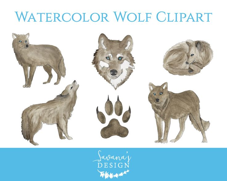 Wolf clipart, watercolor wolf, watercolour wolves, wolf claw, wolf nursery, grey wolf, brush wolf, canis lupus, gray wolves, canine by SavanasDesign on Etsy https://www.etsy.com/listing/497840558/wolf-clipart-watercolor-wolf-watercolour