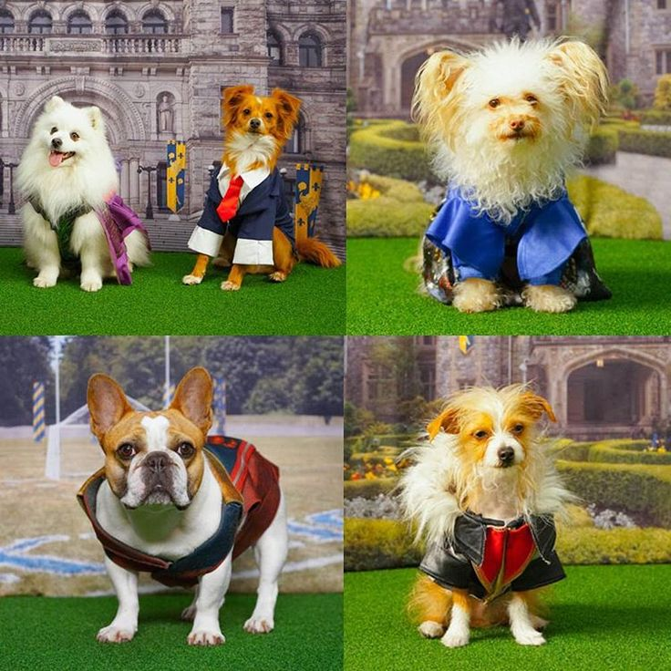 The Cast of Descendants 2 Met Their DOGscendants Counterparts in a Live Video and It Was Wicked Cute! | Oh My Disney