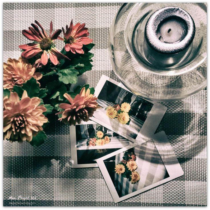 "https://flic.kr/p/21kn5uy | MonProjet365-Novembre2017-Jour 255-2 | #MonProjet365 - Jour 255 - En ce moment, j'aime.... - ""Instantanés de Saison"" - #cutentlyloving #proxi #closeup #automne #autumn #intantphoto #instax #instaxmini #instaxmini90 #fujifilminstaxmini90 #fujifilm #instaxphoto  - #novembre2017  - #nokialumia930 #photo #photography #projet365 #my365 #365photoproject #cy365 #captureyour365 #potd #everydayphotography #reallifephotography - follow me at evecmoi.over-blog.com/"