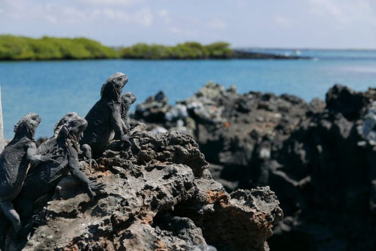El difícil vuelo de las aves en Galápagos