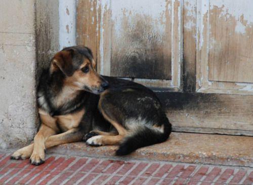 Ayuda a hacer conciencia y así poder acabar con el problema de los perros callejeros.