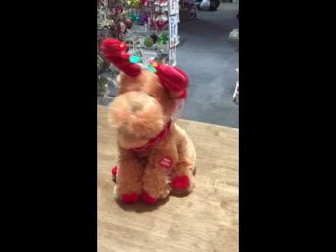 Moose Wonderful. It's The Most Wonderful Time Of The Year with this adorable Moose serenading you. Available @ Christmas 360 Toodyay, follow us on Facebook to see more https://www.facebook.com/Christmas-360-308734315861567/