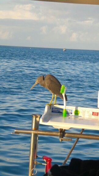Visitor on back deck