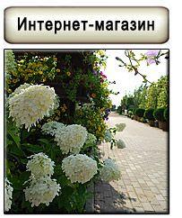 Сакура: Ландшафтный дизайн озеленение продажа растений СПб: Альпийские горки,  композиции из камней и растений, клумбы