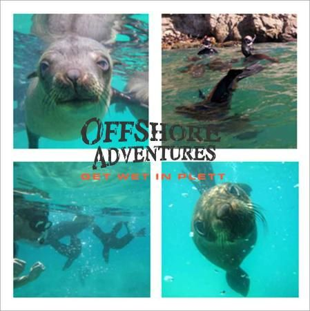 offshore adventures plett - Google Search