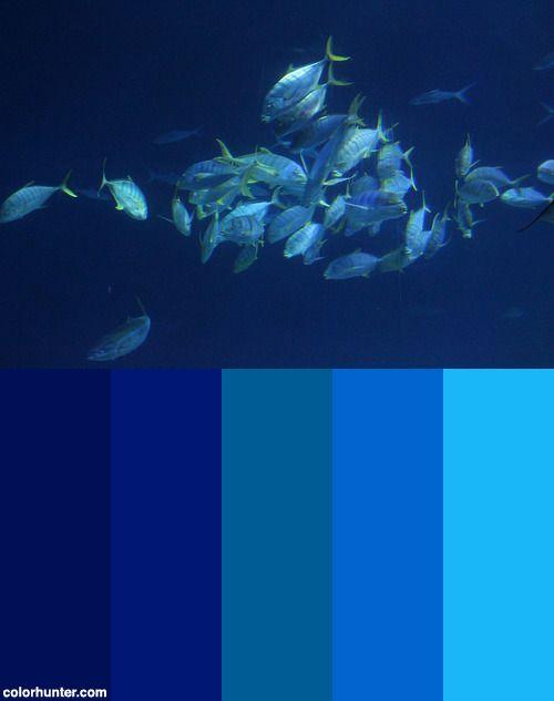 大洋池+The+Open+Ocean+Aquarium+Color+Scheme