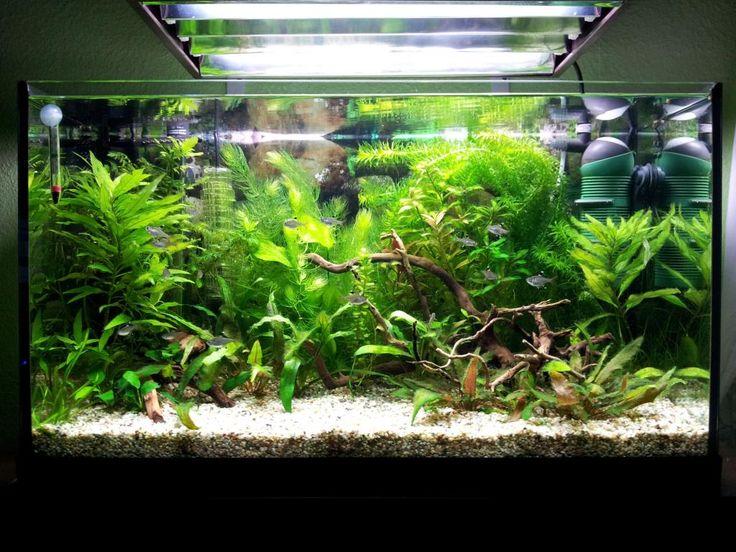 aquarium 300l - Recherche Google
