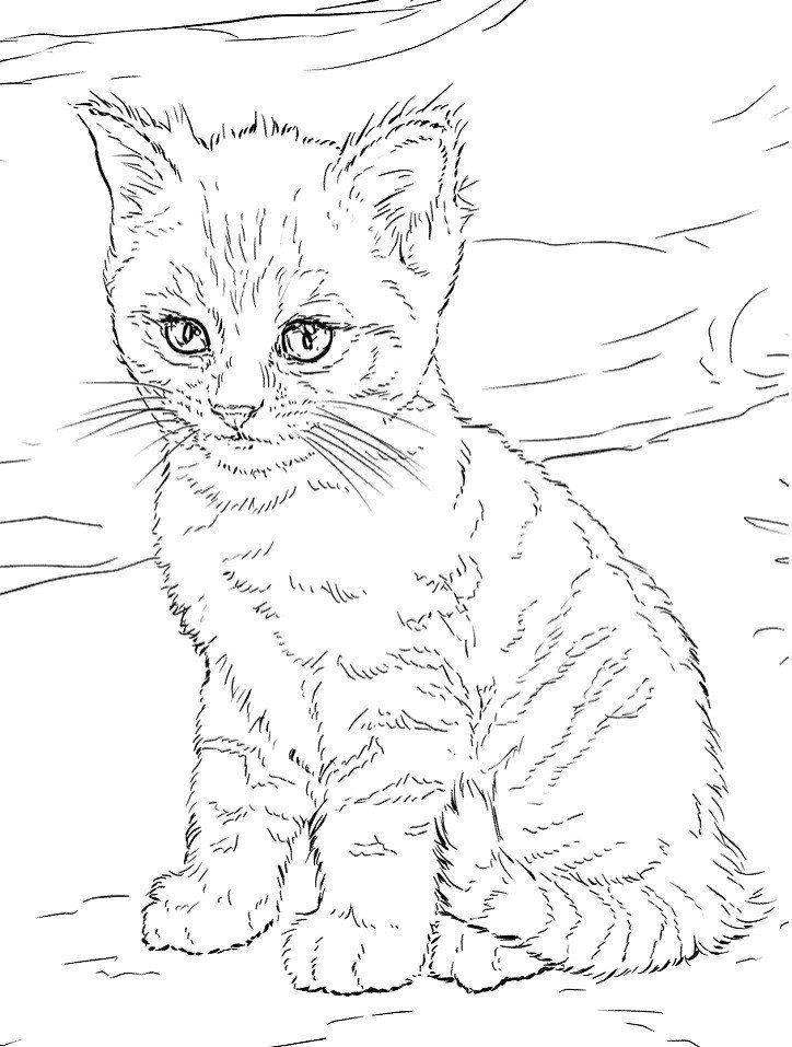 Cute Kitten Coloring Pages Cute Kitten Coloring Page Free Printable Coloring Pages In 2020 Cat Coloring Page Coloring Pages Puppy Coloring Pages