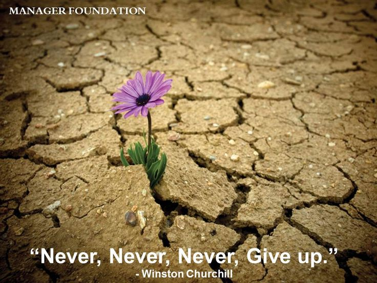 Resilience and Perseverance...