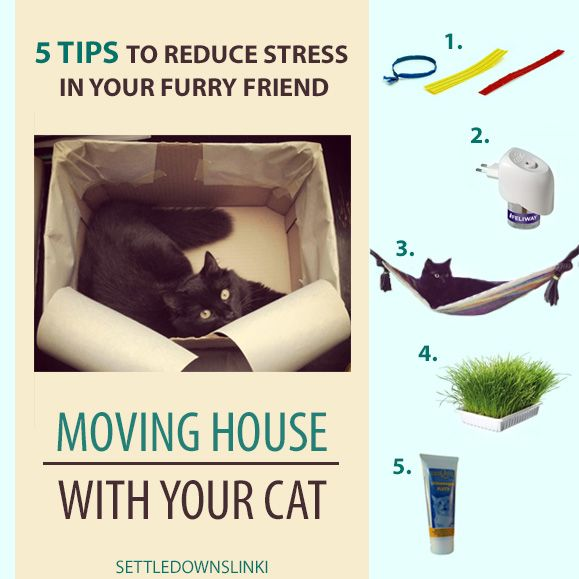 Making Moving Easier: 5 TIPS For Making Moving House Easier On Your Cat