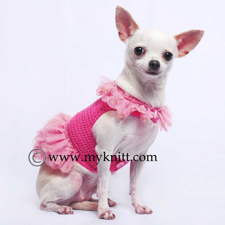 17 best images about myknitt dog clothes on pinterest - Dog clothes for chihuahuas ...