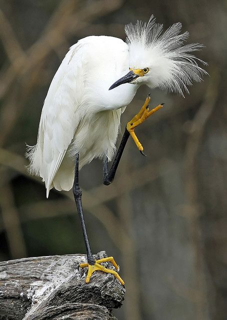VIDA Statement Bag - Snowy Egrets by VIDA wyCNh