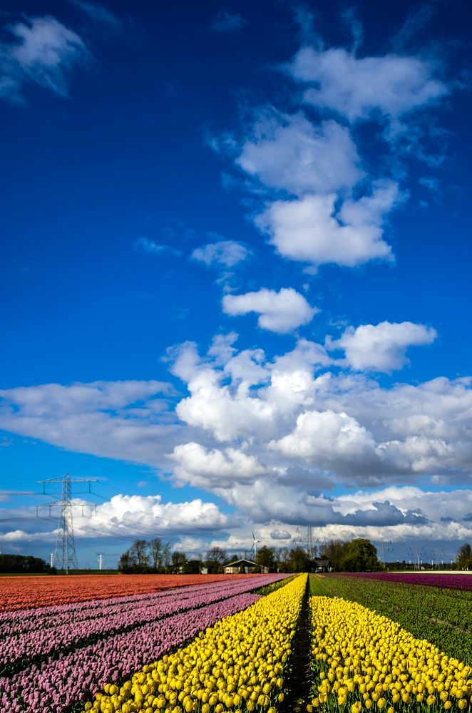 Dutch landscape by Watze D. de Haan
