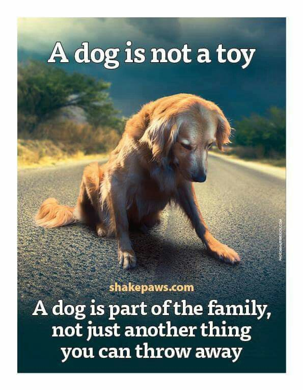 If only people truly understood this! Adopt don't buy!!!!