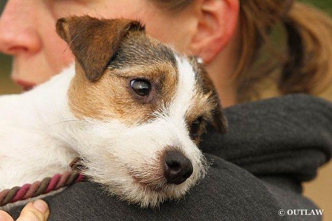 Best 25 Jack Russell Terriers Ideas On Pinterest-3369