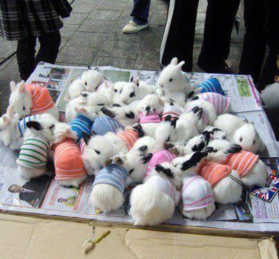 Bunnies! bunnies in sweaters!
