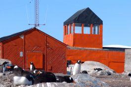 Grytviken, bewoond door pinguins en zeeleeuwen