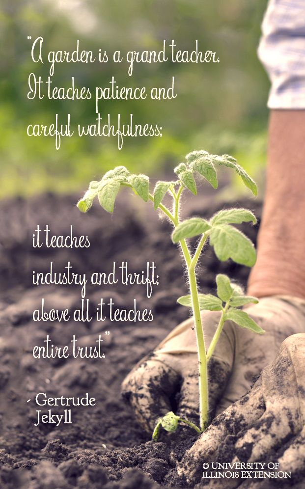 Quote Garden 64 Best Gardening Quotes Images On Pinterest  Gardening Quotes