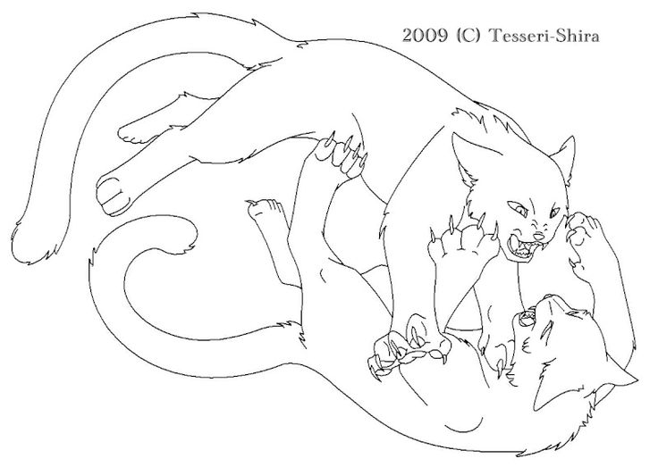 coloring pages of warrior cats - fighting warrior cats warrior coloring pages pinterest