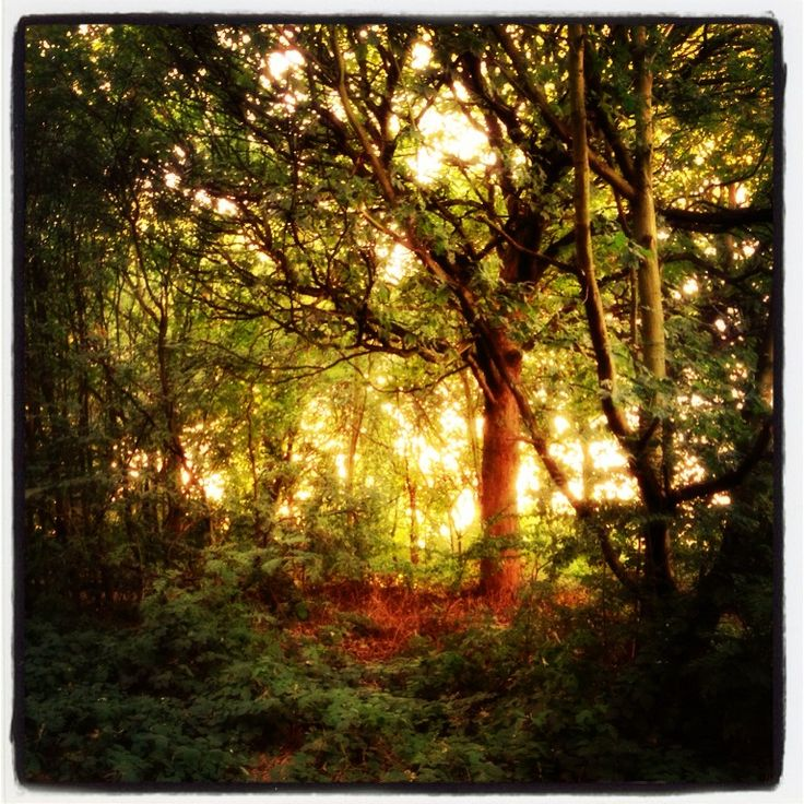 Secret woodlands in #Wakefield #Countryside