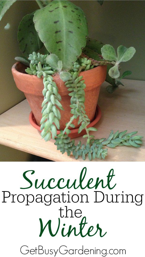 Best 25 Propagate Succulents Ideas On Pinterest